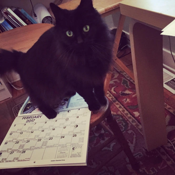 Lily the Astrology Assistant